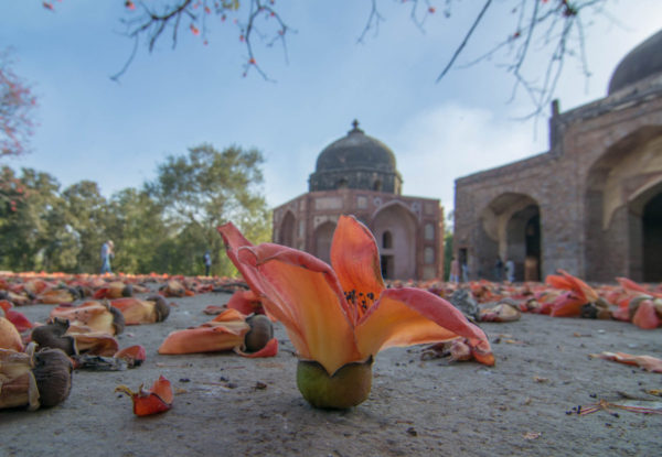Heritage Walks In Delhi